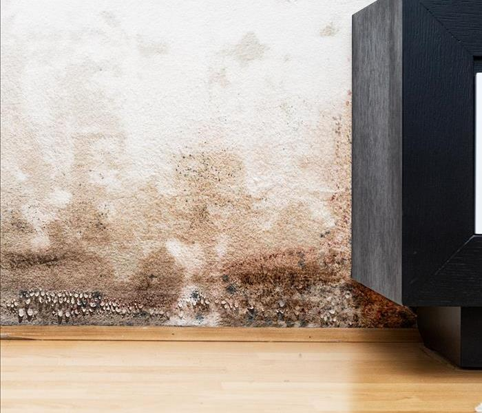 Treating Mold