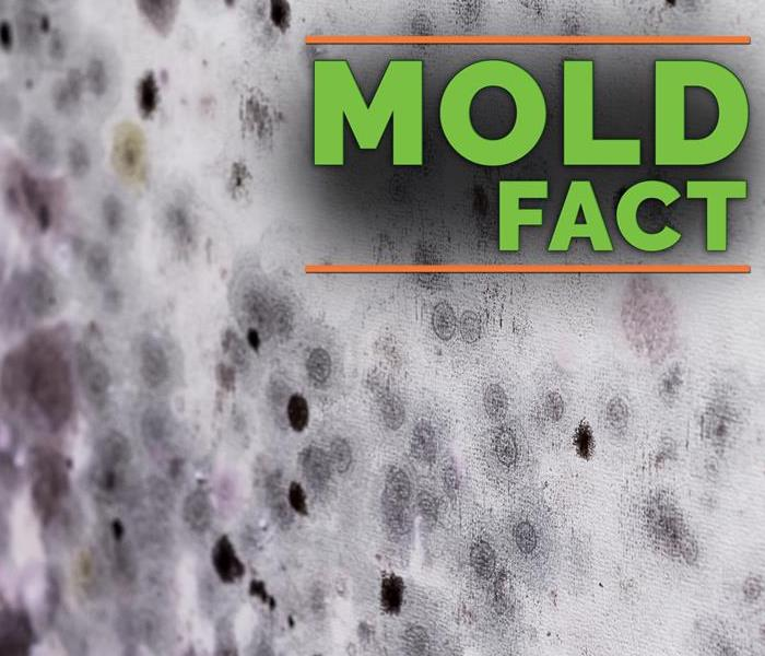 Mold Remediation 3 Reasons Not to Use a Home Mold Testing Kit